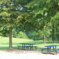 picnic tables in the trees